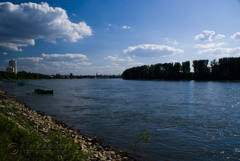 Rhine I