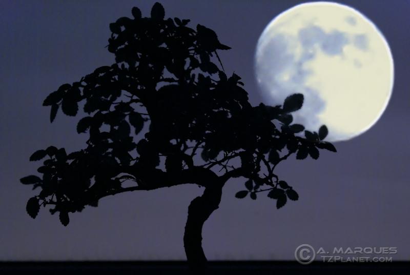 Bonsai with Moon